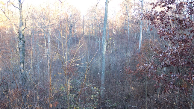 food plot from stand.jpg