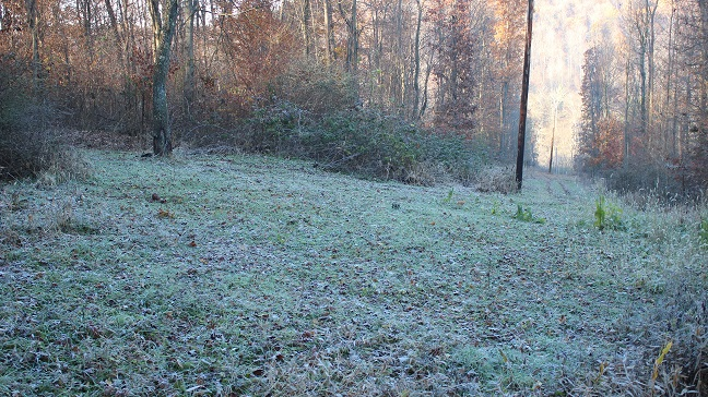 food plot nov 16 downhill.jpg