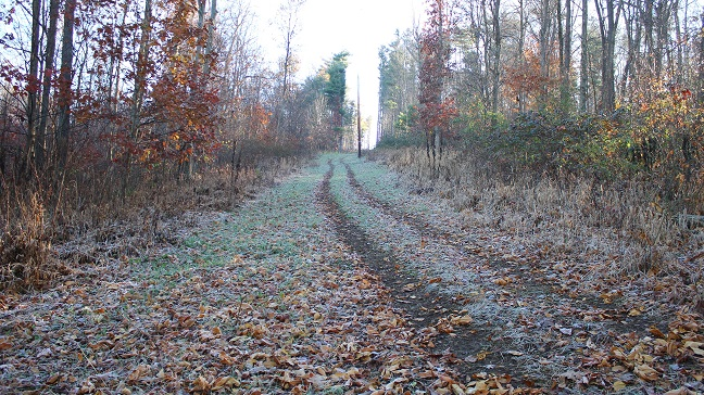 food plot nov 16 uphill.jpg