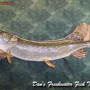 "42"" Northern Pike Reproduction"