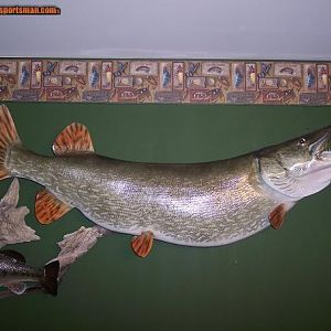 "55"" Northern Pike Reproduction"